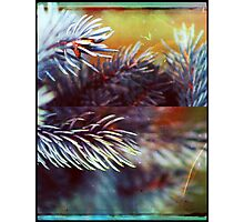 needles Photographic Print