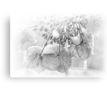 Iced Hydrangea In Light And Shadow - Black and White Canvas Print