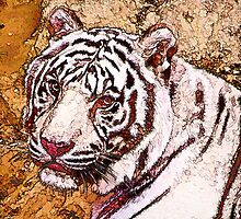 White Tiger by Cathy Donohoue