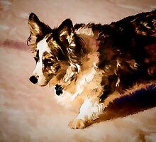 Cardigan Welsh Corgi by Cathy Donohoue