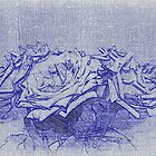 Roses in blue by OlaG