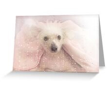 Chinese Crested Hairless Dog Greeting Card