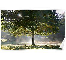 Misty Morning at Dunham Massey Poster