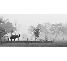 Elephant Haven Photographic Print