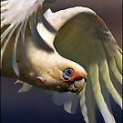 bird's eye view by carol brandt