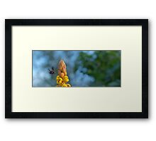Abejorro Bee Framed Print