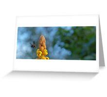 Abejorro Bee Greeting Card