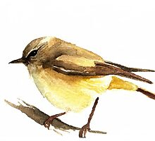 Yellow Thornbill by Denise Faulkner