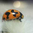 Ladybug by MonaJud