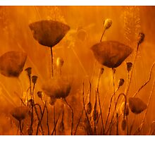 Amongst The Poppies  by mindwarp
