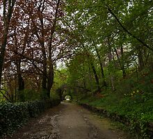 Spring Forest With Tulips by Georgia Mizuleva
