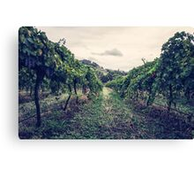 A Vineyard Canvas Print
