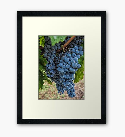 Mudgee Grapes Framed Print