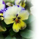 Delicate spring flower by Ana Belaj