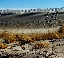 Dunes by Carl H. Heckman