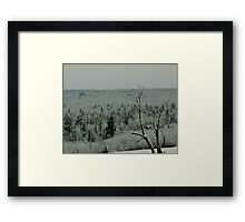 Lone Tree on a Cold Winter's Day Framed Print