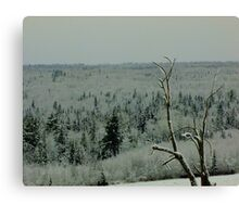 Lone Tree on a Cold Winter's Day Canvas Print