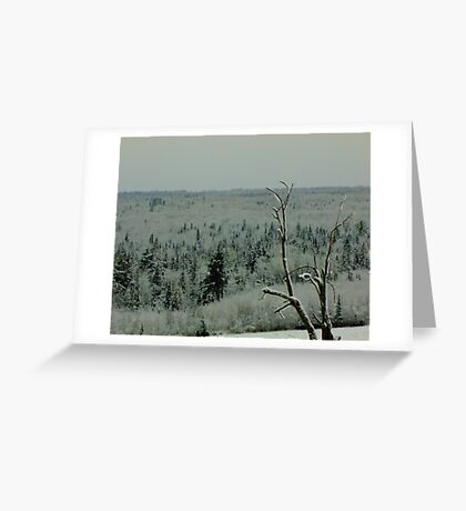 Lone Tree on a Cold Winter's Day Greeting Card