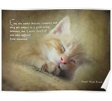Ode to a sleepy cat Poster