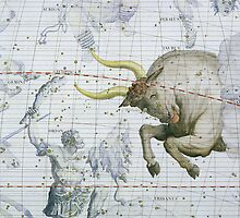 Constellation of Taurus by Bridgeman Art Library