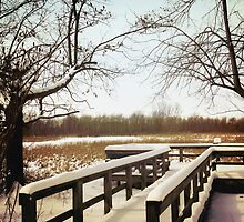 Wintertime At Sheldon Marsh - Overlook by SRowe Art