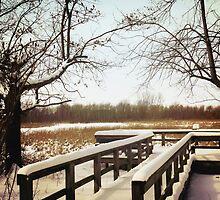 Wintertime At Sheldon Marsh - Overlook by SRowe Art