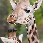 Giraffe by ThomasBlake