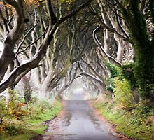 The Dark Hedges by ThomasBlake