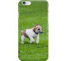 Parsons Jack Russell iPhone Case/Skin
