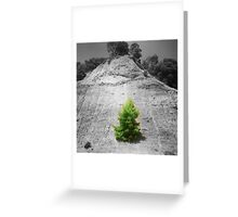 tree1.1 Greeting Card