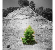 tree1.1 Photographic Print