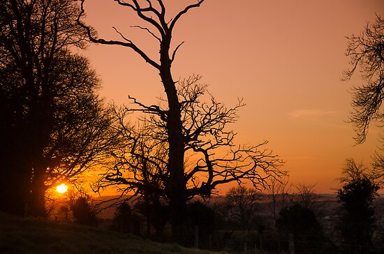 Sunset Trees by Martina Fagan