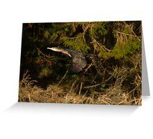 Cormorant in Flight Greeting Card