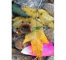 autumn mix Photographic Print