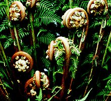 Fiddleheads  by PictureNZ