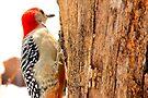 Hang'en by NatureGreeting Cards ©ccwri