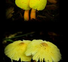 What a difference a day makes ...   in the life of a mushroom by myraj