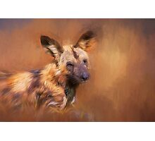Wild Dog! Photographic Print