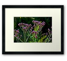Touch Of Purple Framed Print