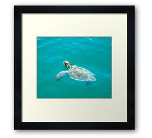 Turtle At Monkey Mia Framed Print