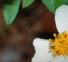 Dewdrop on wildflower Sticker