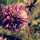 The beautiful untamed wild flower by johnkimages