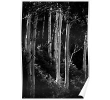 Ghostly Gums on Raspberry Creek Poster