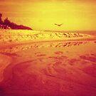 red beach by Barbara Fischer