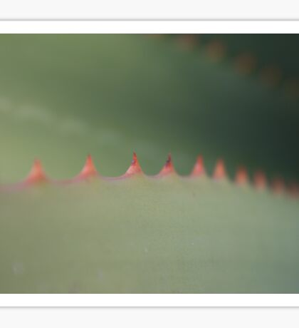 Nature Macro - Red Thorn Aloe Cactus Closeup Sticker