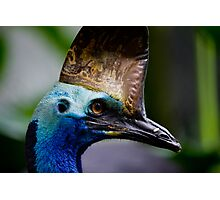 curious cassowary By Ken Killeen  Photographic Print