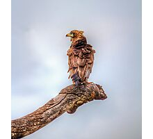 Who ruffled your feathers? Photographic Print