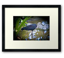 patience By Ken Killeen Framed Print