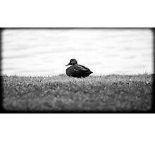 solitude By Ken Killeen Photographic Print