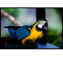 graceful greeting By Ken Killeen Photographic Print